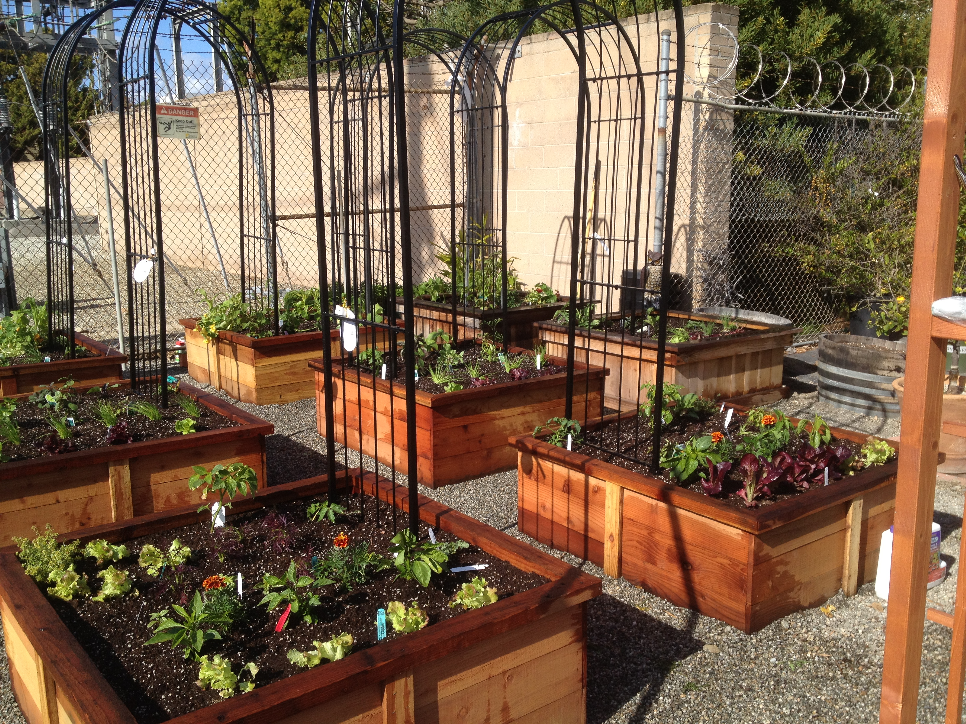 Edible Learning Packages « Home Grown Edible Landscapes