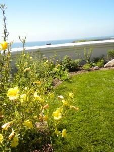 Native California landscapes
